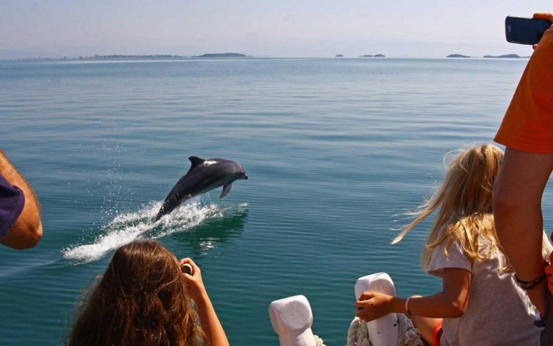 Βόλτα παρατήρησης δελφινιών